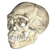 Ancient Fossils from Morocco Mess Up Modern Human Origins