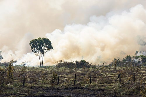 Poor Countries Do More When It Comes to Saving Forests