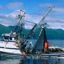 Fishing net salmon