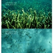 Florida Reefs Begin to Dissolve Much Sooner than Expected