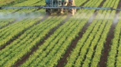 Farm Pesticides Linked to Skin Cancer