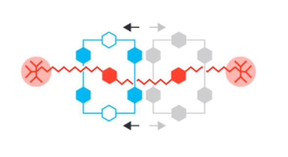 Nobel in Chemistry for Molecular Machines