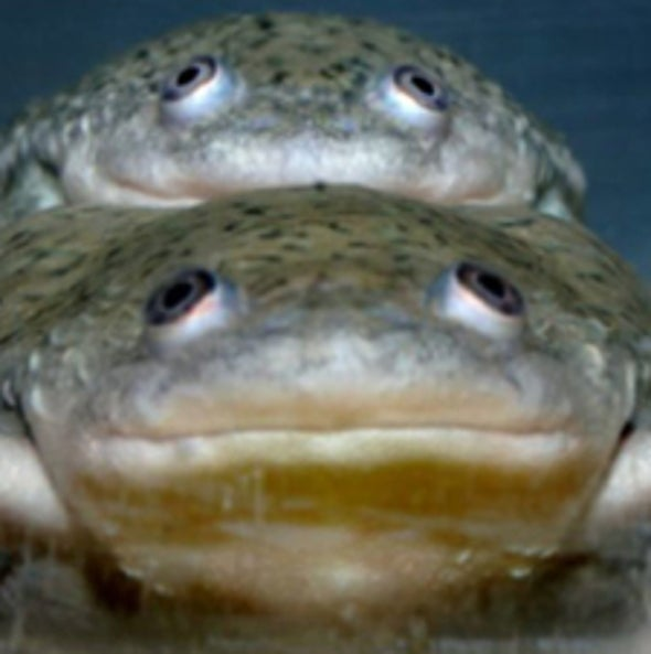 A Common Herbicide Turns Some Male Frogs into Females