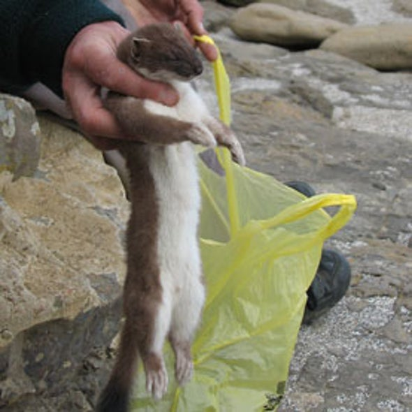 Going to Seed: Climate Change Could Spark Small Mammal Invasion