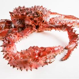 Are King Crabs Invading Antarctic Seas?