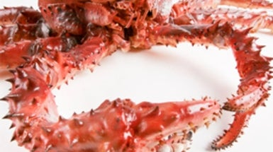 Are King Crabs Invading Antarctic Seas?