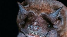 Bat Says Hi as It Hunts