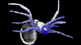 "305-Million-Year-Old ""Almost Spider"" Unlocks Arachnid History"