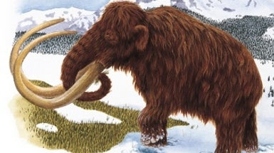 Mammoth Find Moves Humans in Arctic Back 10,000 Years