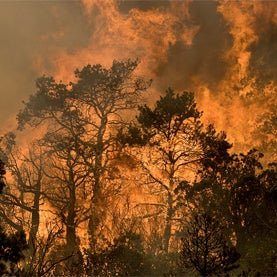 new mexico, wildfire, drought, american west, U.S., climate change, global warming