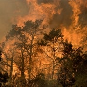 As Wildfires Rage in U.S. West, Scientists Predict Worse Blazes in Future