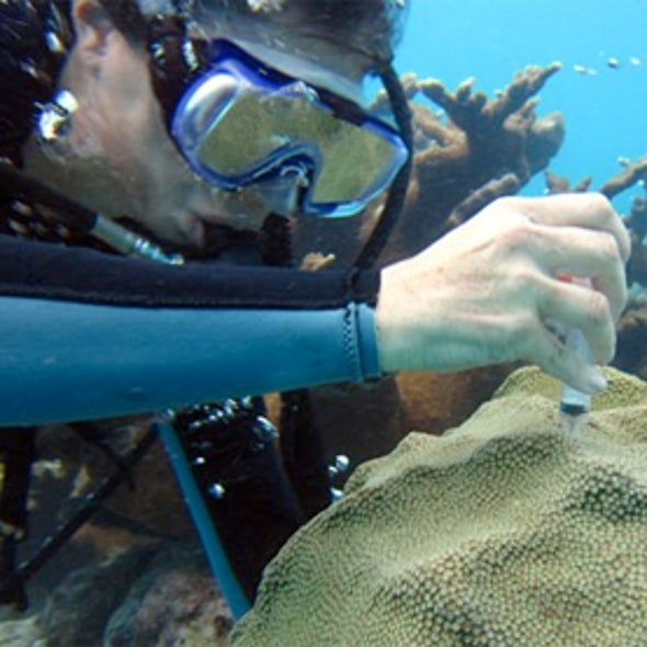 Gene Therapy Could Help Corals Survive Climate Change
