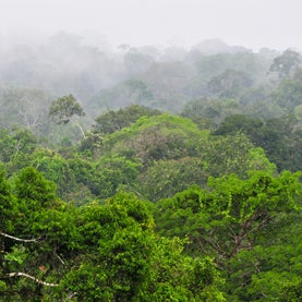 Ecuador Asks World to Pay to Keep Yasuni Oil Underground