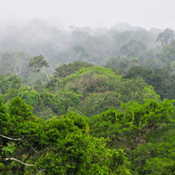 Ecuador Asks World to Pay to Keep Yasuni Oil Underground