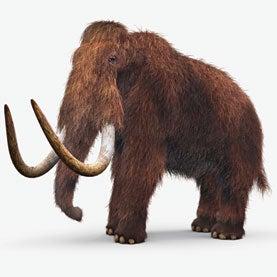 Fact-Checking a Frozen Mammoth