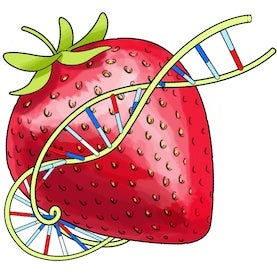 Squishy Science: Extract DNA from Smashed Strawberries ...