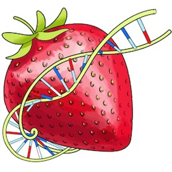 Squishy Science: Extract DNA from Smashed Strawberries