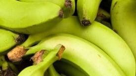 The Origin of Fruit Ripening