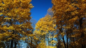 Trees in Eastern U.S. Head West as Climate Changes