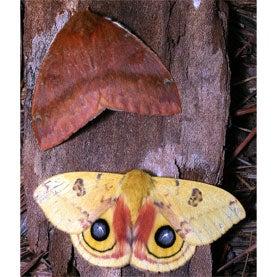 National Moth Week 2014