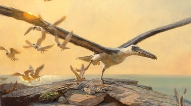 Bizarre, Giant Birds Once Ruled the Skies