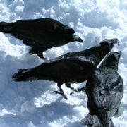 Ravens Use