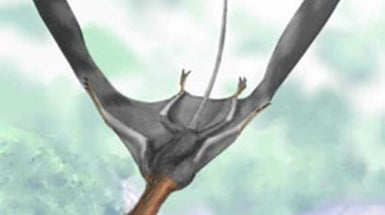Wind Tunnel Tests Reveal Pterosaurs Could Soar for Hours