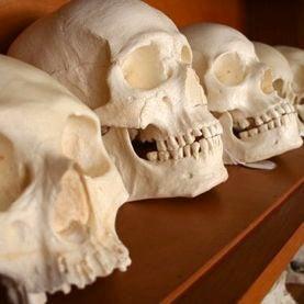 Battered Skulls Reveal Violence among Stone Age Women