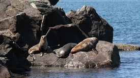 Seals Brought Tuberculosis to the Americas
