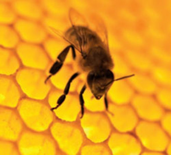 Bees Have Small Brains But Big Ideas