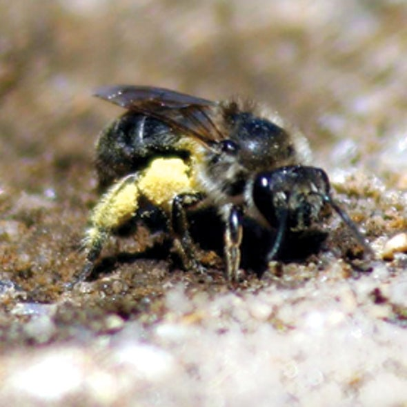 Can Bees Make Tupperware?