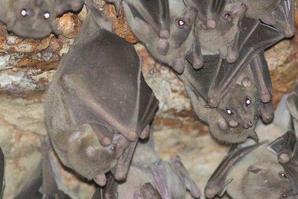 Bat Banter is Surprisingly Nuanced