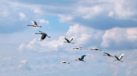 Migrating Birds Prefer Lakefront Property