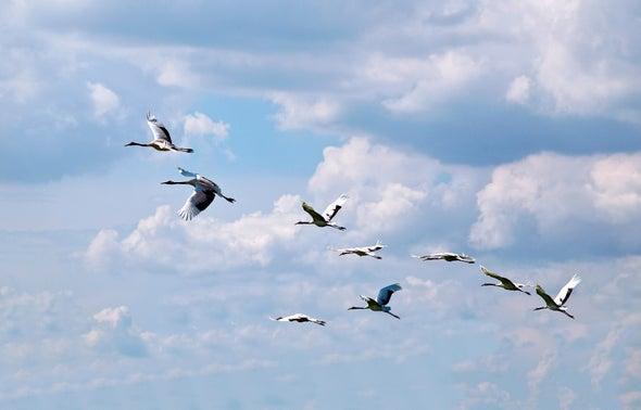 Migrating Birds Prefer Lakefront Property