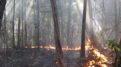 Human-Lit Fires Can Pose Threat to Amazon Rainforest