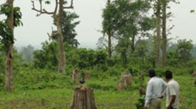 India's Forest Area in Doubt