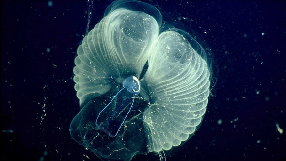 'Snot Palaces' Reveal Undersea Creature Secrets