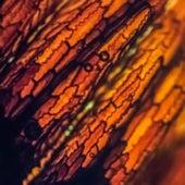 Reed Node, Equisetum hyemale (Rough Horsetail)