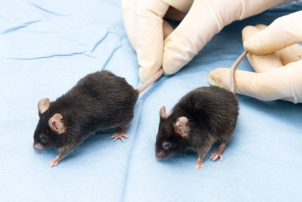 Destroying Worn-Out Cells Makes Mice Live Longer