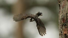 States Attack U.S. Endangered Species Act Rules