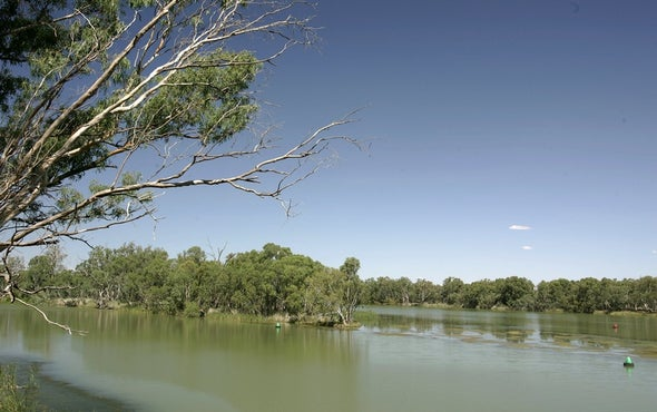 Heat Waves Are Causing Mass Fish Deaths in Australia