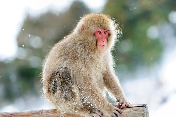 Aggressed-Upon Monkeys Take Revenge on Aggressor's Cronies