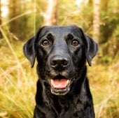 Who's a Smart Dog?!