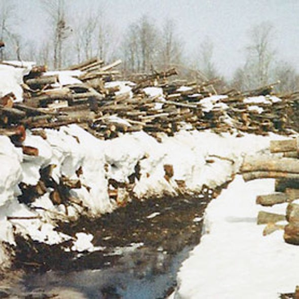Shorter Winters Chip Away at New York State Logging Town's Future