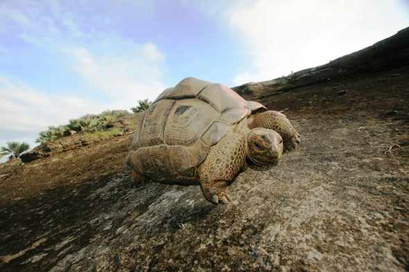 Fact or Fiction?: The Sixth Mass Extinction Can Be Stopped