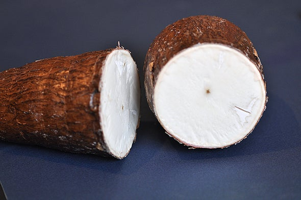 Protecting Cassava from Disease? There's an App for That