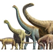 Triumph of the Titans: How Sauropods Flourished