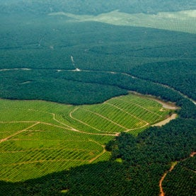 oil-palm-plantations-borneo