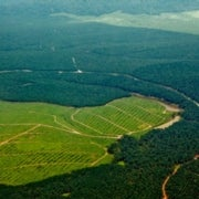 The Smart Way to Play God with Earth's Limited Land