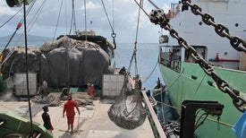 """Science Closes In on Big-Scale Fish Poachers in the """"Wild Wet"""""""